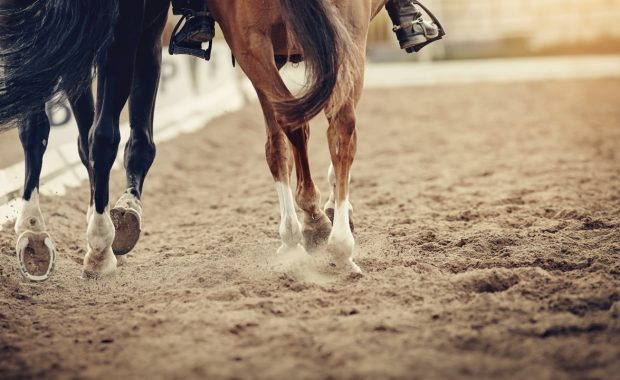 two horses in an equine arena